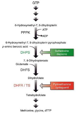 Mode of action of folate antagonists in protozoa