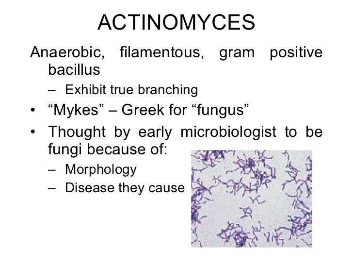 Actinomyces lecture slides