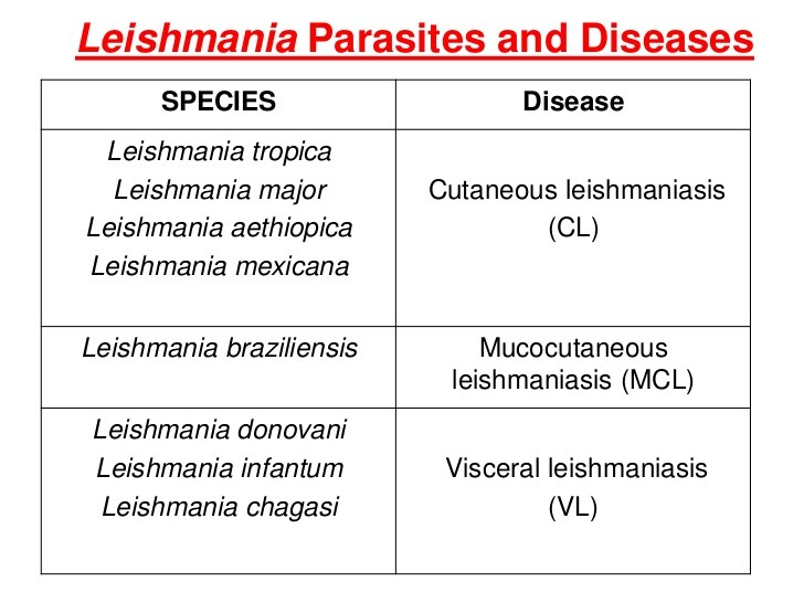 Leishmania parasites and diseases