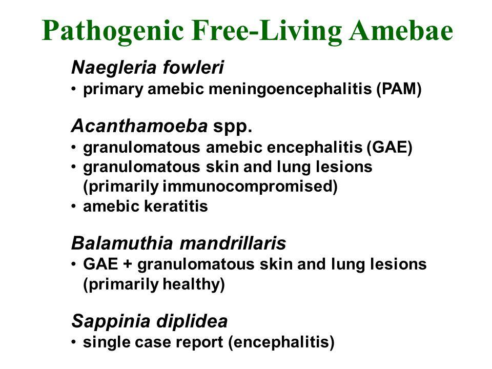 Pathogenic Free Living amebas