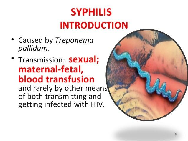 Syphilis treponema pallidum