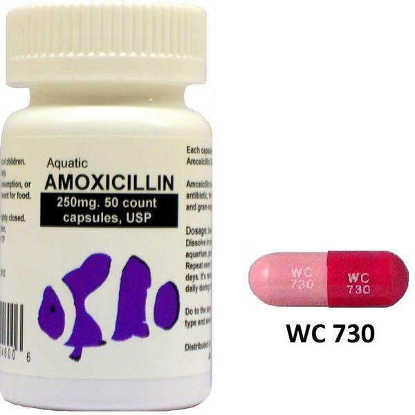 Amoxicillin (Amoxil) 500mg