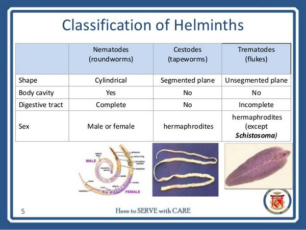 Tissue And Blood Helminths