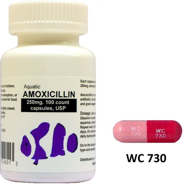 Buy Amoxil (Amoxicillin) Without Prescription 500mg - Drug