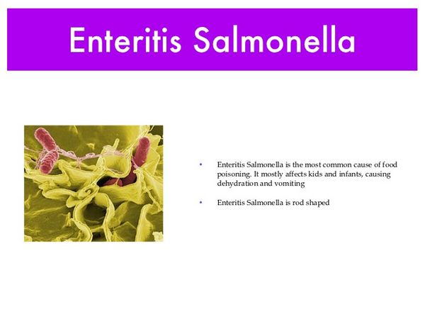 SALMONELLA ENTERITIS