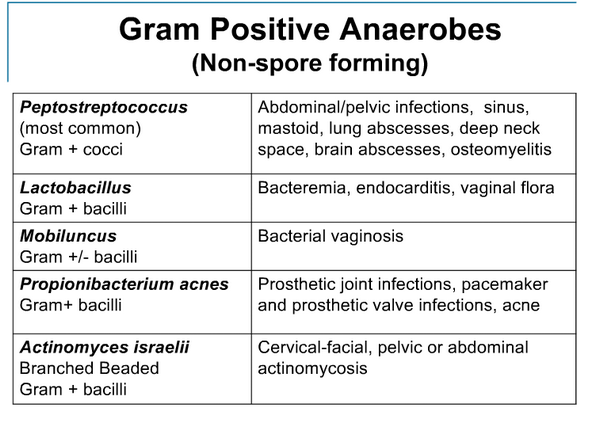 Important Anaerobes