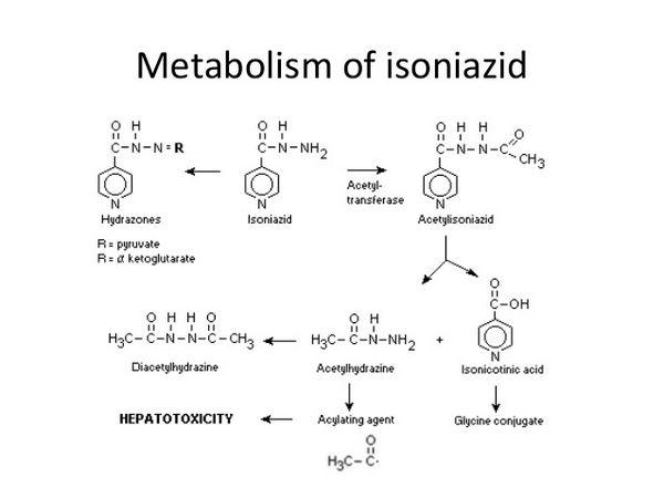 Isoniazid - Antituberculosis Agent