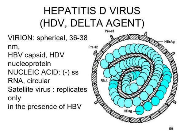 Hepatitis D (Delta Hepatitis)