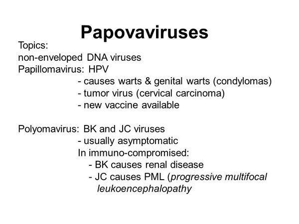 Papovaviruses