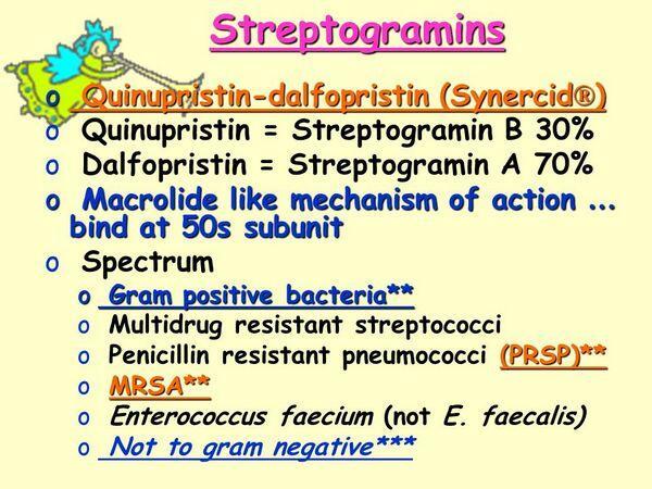Streptogramins